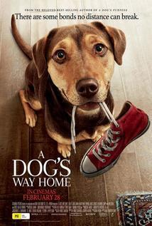 Subtitrare A Dog's Way Home (2019)